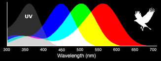 Bird eye wavelength sensitivity